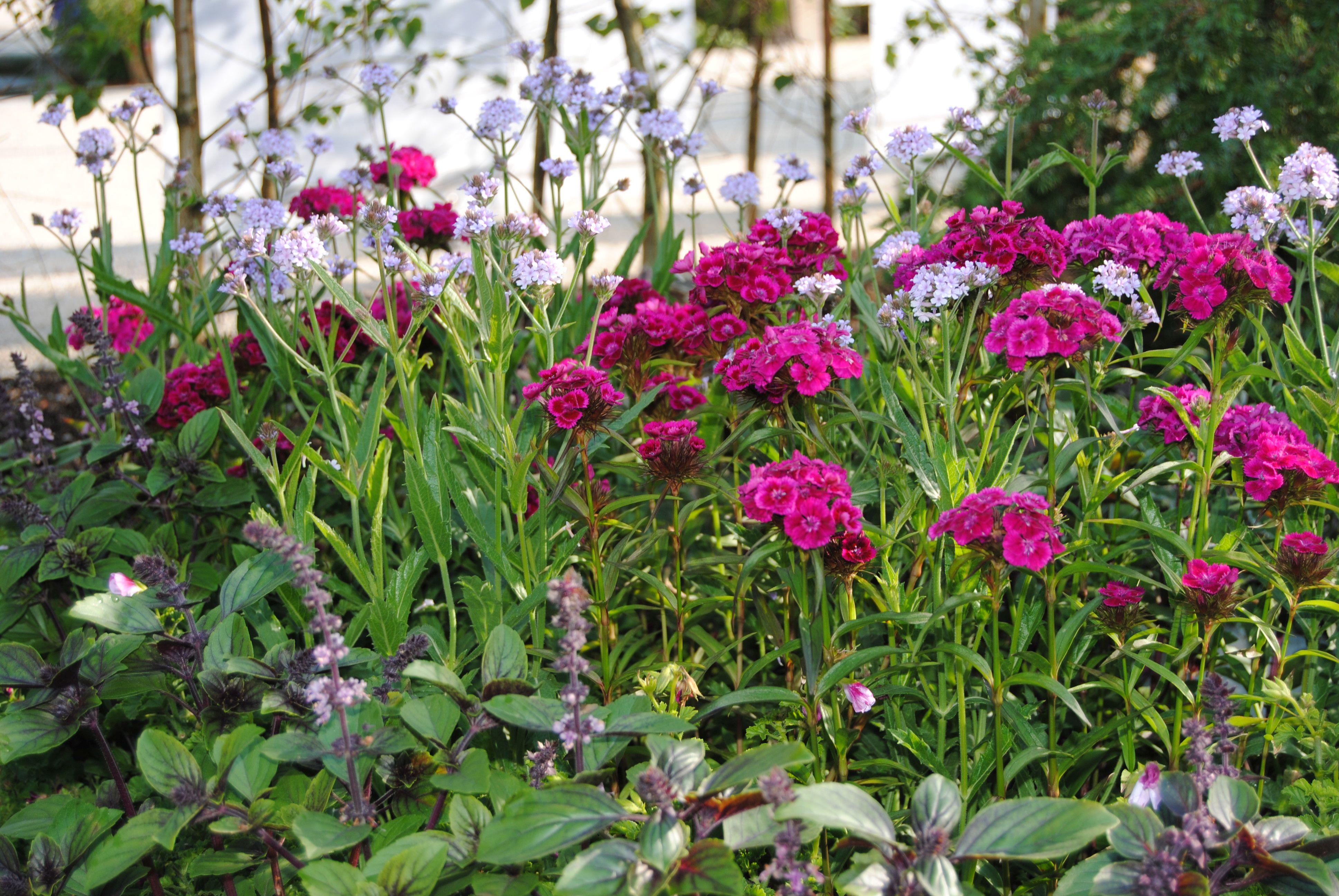 Bienenweide Oder Schneckenfrass Dauergrabpflege Bayern